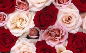 cambiando de color a una rosa(1)