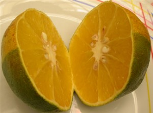 Naranja en dos mitades